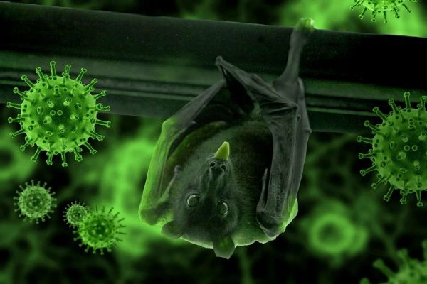 Bat COVID corona